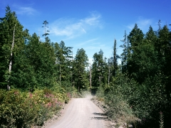 12 logging road 2.jpg