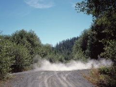 13 logging road 3.jpg